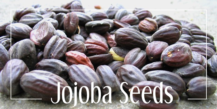 jojoba-seeds.png